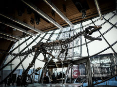 150-Million-Year Old Dinosaur Skeleton Sells For 2 Million Euros