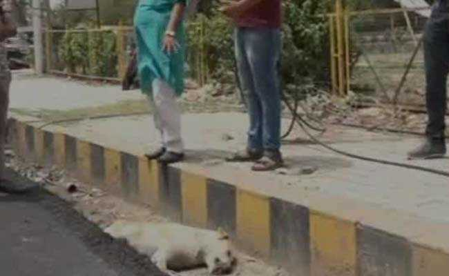 Road Built Over Dog's Body In Agra. It Was Alive, Allege Residents