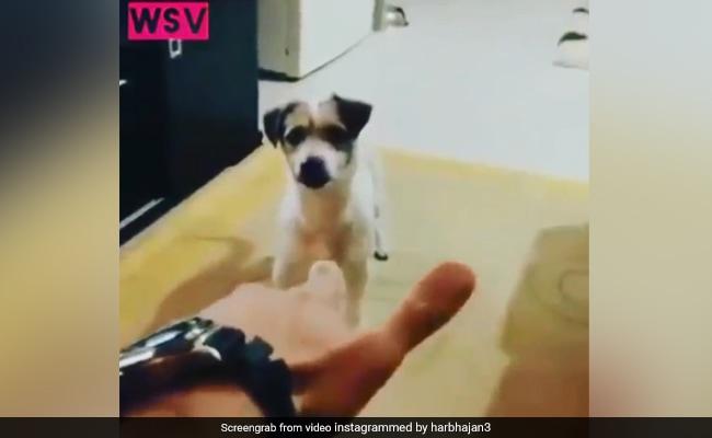 VIDEO: कुत्ते ने कुछ इस अंदाज में की मरने की एक्टिंग, देखकर आ जाएगी हंसी