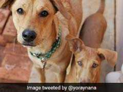 "Outrage Over Bengaluru's ""1 Pet Dog Per Flat"" Regulation"
