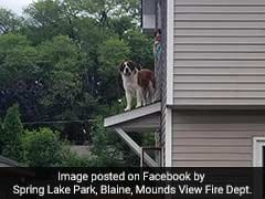 Big Fluffy Dog Stuck On Roof Needed Firefighters To Rescue Him