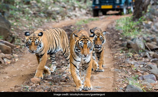 experts fear for india s wildlife as china allows trade of animal parts