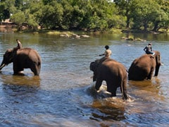 """""""Elephants, Like Us, Have Nowhere To Go"""": India's Human-Wildlife Conflict"""