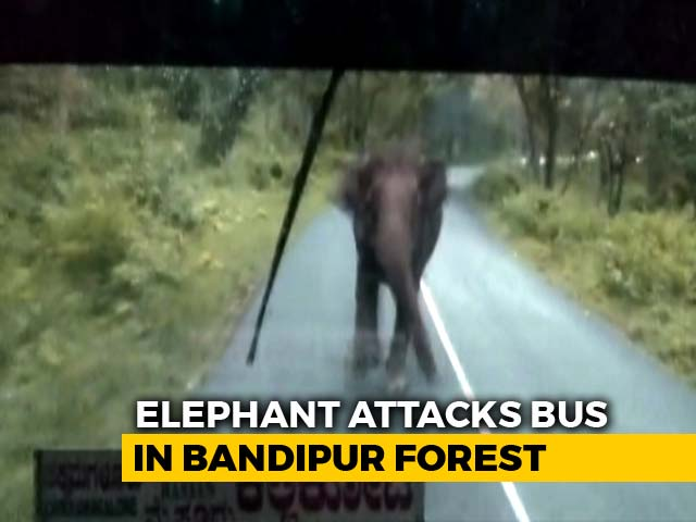 Video : Panic On Bus, Driver Hits Reverse As Elephant Charges. Watch