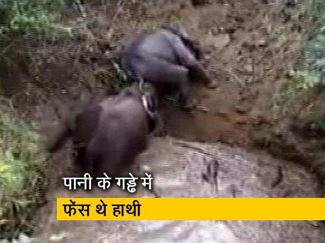 Video : जंगल के गड्ढे में फंसे हाथी को बचाया गया