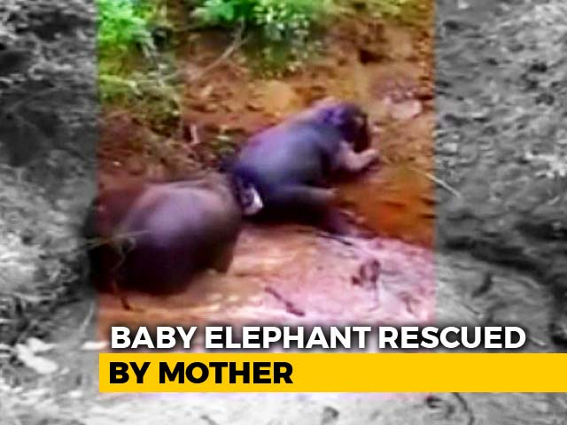 Video : Watch: 3 Elephants Fall Into Well In Tamil Nadu, Rescued In 6 Hours