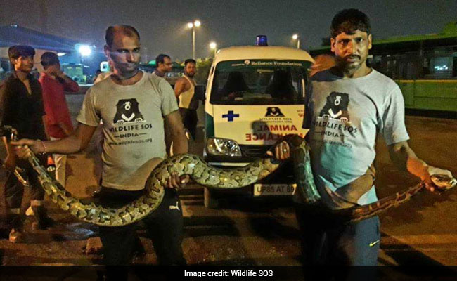 10-Foot Python Found Under Bus In Delhi. Pic Is Anxiety-Inducing