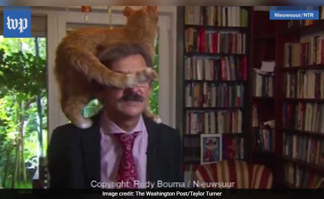 Cat Climbs On Professor During TV Interview. He Remains Unfazed