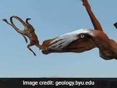 """200 Million-Year-Old Pterosaur """"Built For Flying"""""""