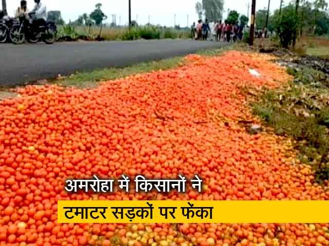 Video : उत्तर प्रदेश के अमरोहा में किसानों ने टमाटर सड़कों पर फेंका, सही दाम न मिलने से नाराज