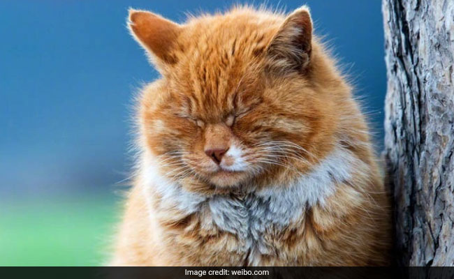 Mystic Moggy: China Mourns 'Psychic' World Cup Cat