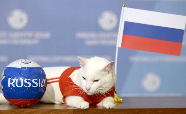 Russia To Win First World Cup Match, Achilles The 'Psychic' Cat Predicts
