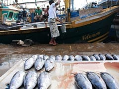 Yes, Fish Feel Pain, Say Scientists. Fishermen Won't Buy It