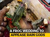 Video : Frogs Married In Madhya Pradesh To 'Please Rain Gods', Minister Attends