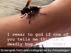 Chrissy Teigen Befriends Bug. Twitter Tells Her It's Dangerous Wasp