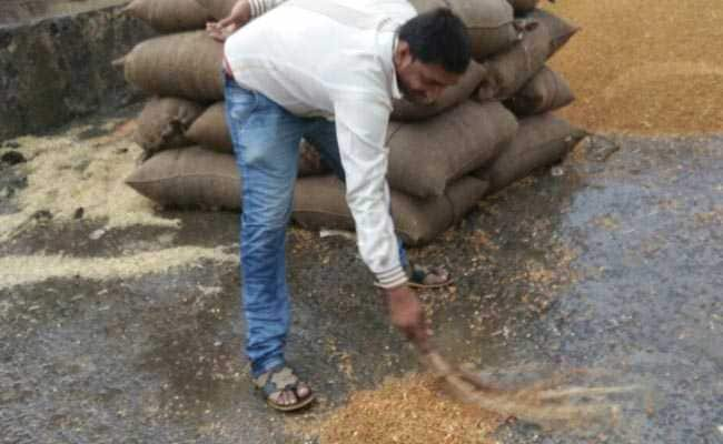 अनाज की बंपर पैदावार लेकिन सरकारी लापरवाही से सड़ रहा खाद्यान्न
