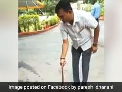 Watch: Gujarat Congress Leader Tackles Venomous Snake Outside Home