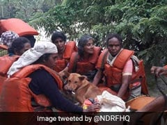 Kerala Woman Refuses Flood Rescue Without Her 25 Dogs