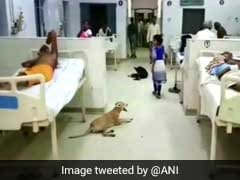 Patients On The Bed, Dogs Under It, In A Hospital Ward In UP's Hardoi