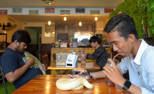 Eat With Pythons, Pet Iguanas At This Cambodian Reptile Cafe