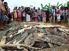 Angry Mob Slaughtered Nearly 300 Crocodiles In Revenge Attack