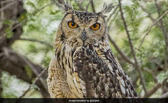 5 Owls Worth Rs 1 Crore Rescued From Being Sacrificed In Ghaziabad