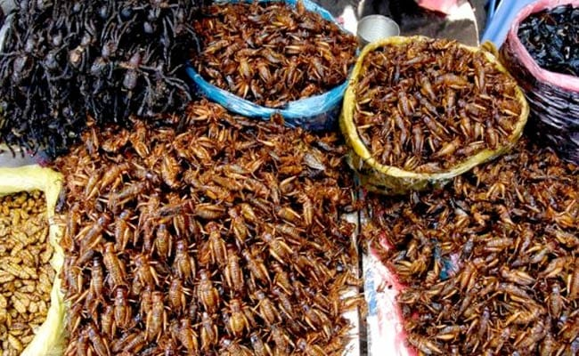 What is cockroach milk? Is it healthier than regular milk?