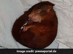 German Police Save Man Being Chased By Baby Squirrel