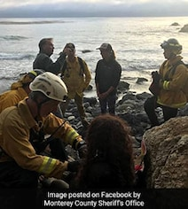 Woman Falls Off A Cliff, Survives 7 Days 'Trapped' On A Secluded Beach