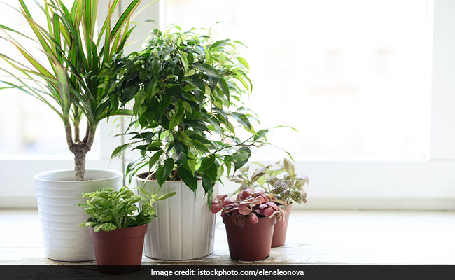 5 Ways To Style Your Home With Indoor Plants