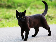 6 Superstitions From Around The World On Friday The 13th
