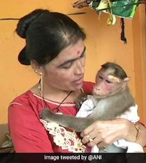 Karnataka Cop Rescues And Adopts Electrocuted Monkey, Wins Hearts