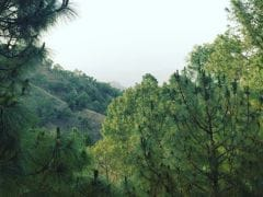 Weekend Getaway To Kasauli: Switch Off To Enjoy Life In A Pine Forest