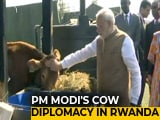 Video : India Donates 200 Cows For Rwandan Economic Development Project