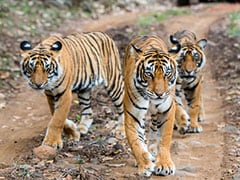 Experts Fear For India's Wildlife As China Allows Trade Of Animal Parts