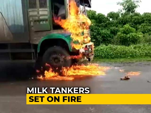 Video : In Maharashtra, Milk Farmers Protest; Supply Badly Hit