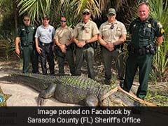 Police Officers Capture Huge 13-Foot Alligator From A Public Park