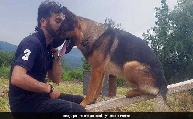 Hero Dog Saved Humans After Quake, And Humans Poisoned Him, Say Activists