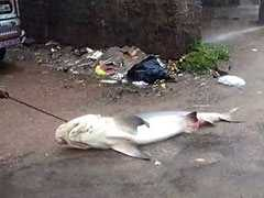Shark, 5 Foot Snake On Flooded Mangaluru Streets After Heavy Rain. Watch