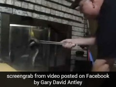 Man Spots 6-Foot Snake In Fireplace, Uses Barbecue Tongs To Remove It. Watch