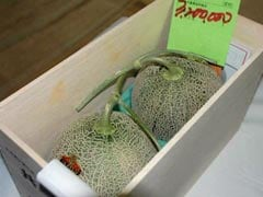 Pair Of Premium Melons Sell For Record 3.2 Million Yen At Japan Auction