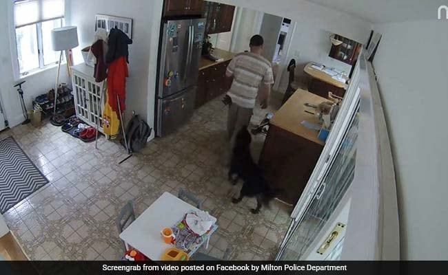 Thief Breaks Into House, Family Dog Follows Him Around Wagging Its Tail