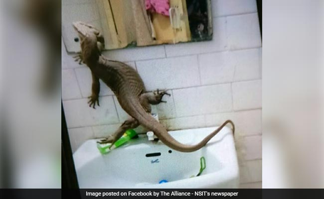 Monitor Lizard Found Inside Girls Hostel In Delhi College