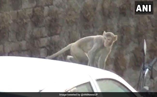 Monkey Snatched Bag Filled With Rs 2 Lakh Cash, Claims UP Man