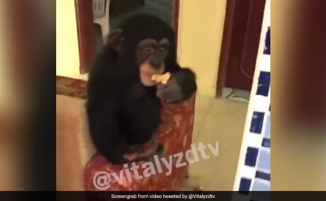 YouTube Star Faces Flak Over Viral Clip Showing Monkey Smoking Marijuana