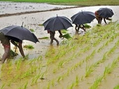 Need Policies To Improve Water Efficiency In Farm Sector: Economic Survey