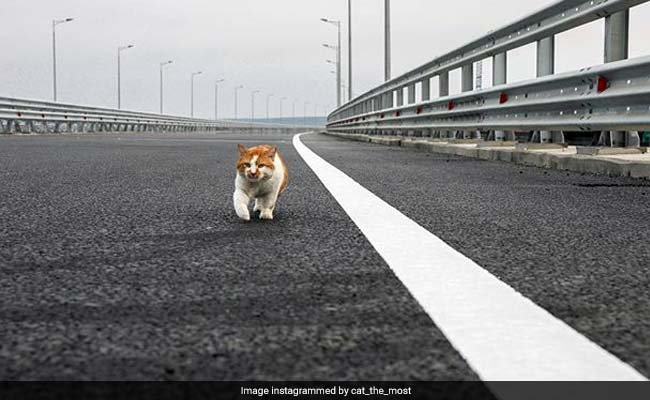 Putin Made A Show Of Crossing The New Crimea Bridge. But He Was Upstaged By A Cat