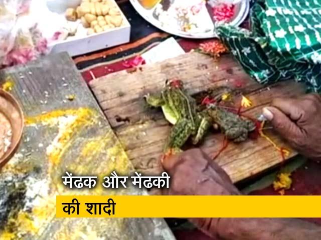 Videos : मध्यप्रदेश के छतरपुर में बारिश के लिए मेंढक और मेंढकी की शादी