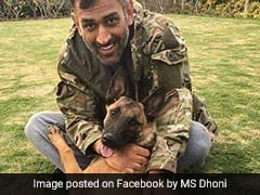 Watch: MS Dhoni Takes His Dogs For A Walk