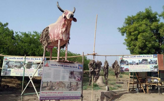 With His Fetid Cow Model, Dalit Man In Gujarat Has A Message